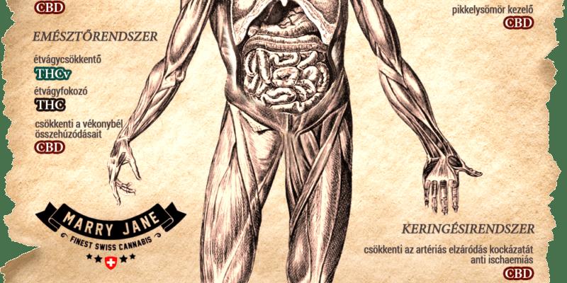 Kendertér - Alternatívája a gyógyszernek - nem alternatív gyógyászat! - ember es a kannabisz 800x400