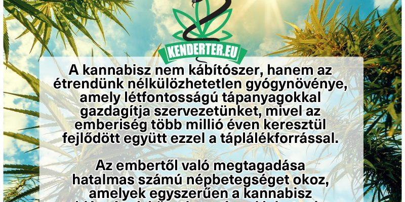 Kendertér - A mi növényünk a mi táplálékunk! - 88102416 199778154765445 2948960563029344256 n 800x400