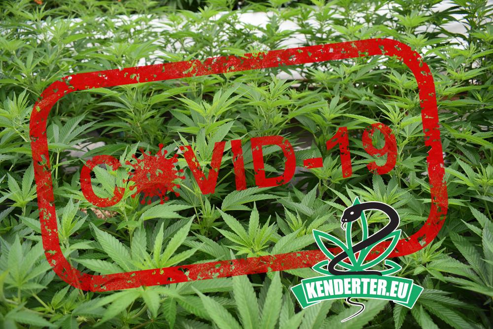 """Kendertér - A koronavírus-válság egyértelművé teszi, hogy a kannabisz """"létfontosságú"""" és irányadó - cannabis covid19"""