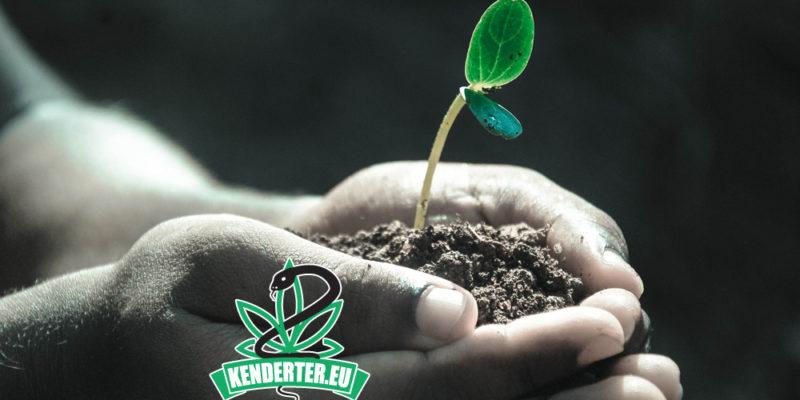 Kendertér - Az THC hatékonyan csökkenti idős betegek fájdalmát - toxic soil 800x400