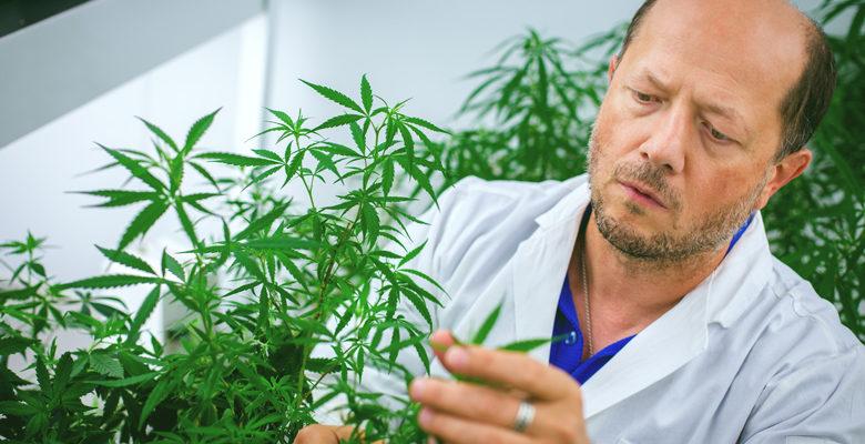 Kendertér - Endokannabinoid profil: Virodhamin - IgorMain 780x400
