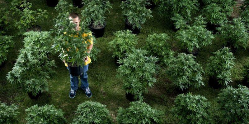 Kendertér - Mi ez a 420-azás, honnan jön ez az egész? - cannabis2 1024x576 800x400