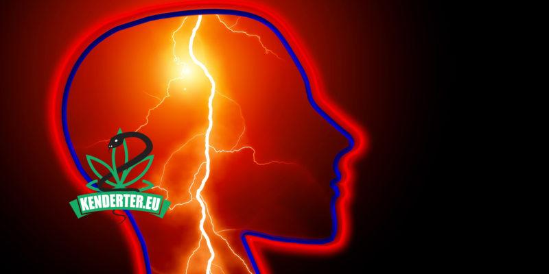 Kendertér - CBD olaj az epilepszia kezelésére - epilepszia cbd 800x400