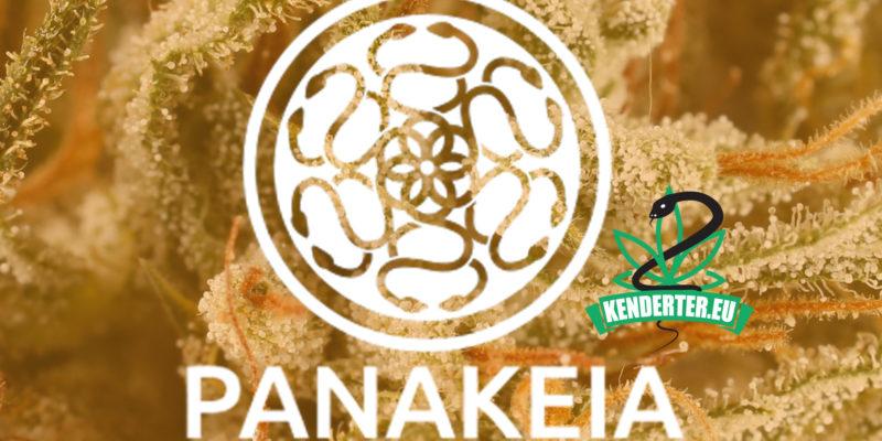 Kendertér - Bemutatjuk az első teljes mértékben THC-mentes kannabisz törzset. Panakeia és a CBG. - panakeia kenderter kannabisz 800x400