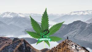 Az új-zélandiak ősszel legalizálnák a kannabiszt, ezt Snoop Dogg sem hagyta szó nélkül