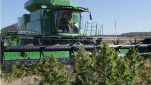 Egy egyesült államokbeli cég a Deere kombájnokkal kompatibilis kannabisz aratására alkalmas aratószerkezetet dob a piacra