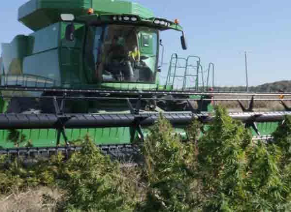 Kendertér - Egy egyesült államokbeli cég a Deere kombájnokkal kompatibilis kannabisz aratására alkalmas aratószerkezetet dob a piacra - 01 INTERCEPTOR front view777 600x438