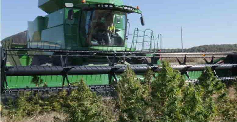 Kendertér - Egy egyesült államokbeli cég a Deere kombájnokkal kompatibilis kannabisz aratására alkalmas aratószerkezetet dob a piacra - 01 INTERCEPTOR front view777 777x400