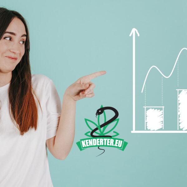 Kendertér - Vestibulum consectetur - kannabisz gallup 2020 600x600