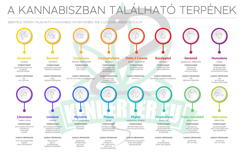 A kannabiszban található legfőbb terpének, azok tulajdonságai és gyakori alkalmazási területei