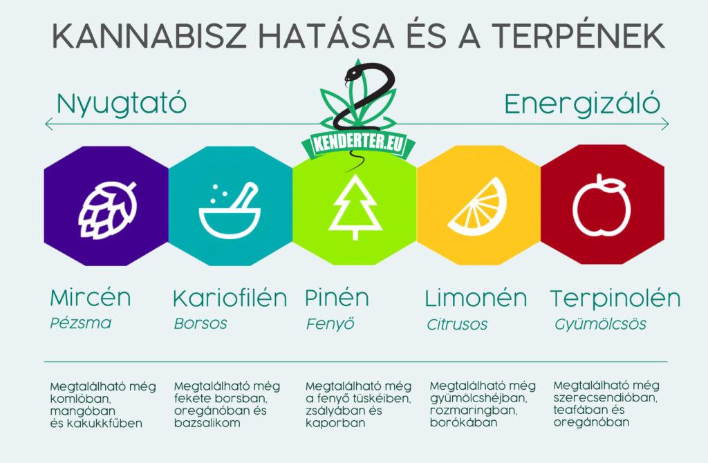 A kannabiszban található öt leggyakoribb terpén, ízeik, valamint más gyümölcsök és gyógynövények, amelyekben megtalálhatók.