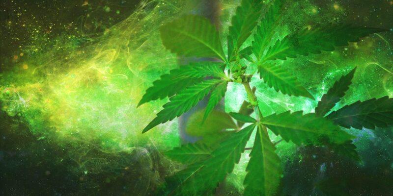 Kendertér - A marihuána hatásával rokon vegyületeket is termelünk sportolás közben - marihuana 800x400