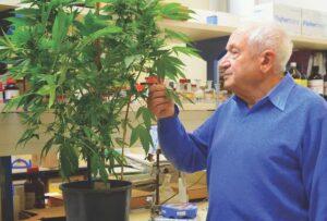 Dr. Raphael Mechoulam új orvosi potenciállal rendelkező kannabinoidot izolált