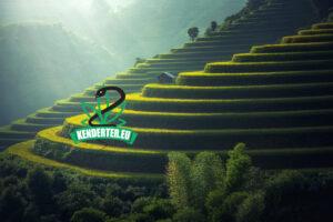 Thaiföld lehetővé tenné a magánszektor számára a kannabisz termesztését