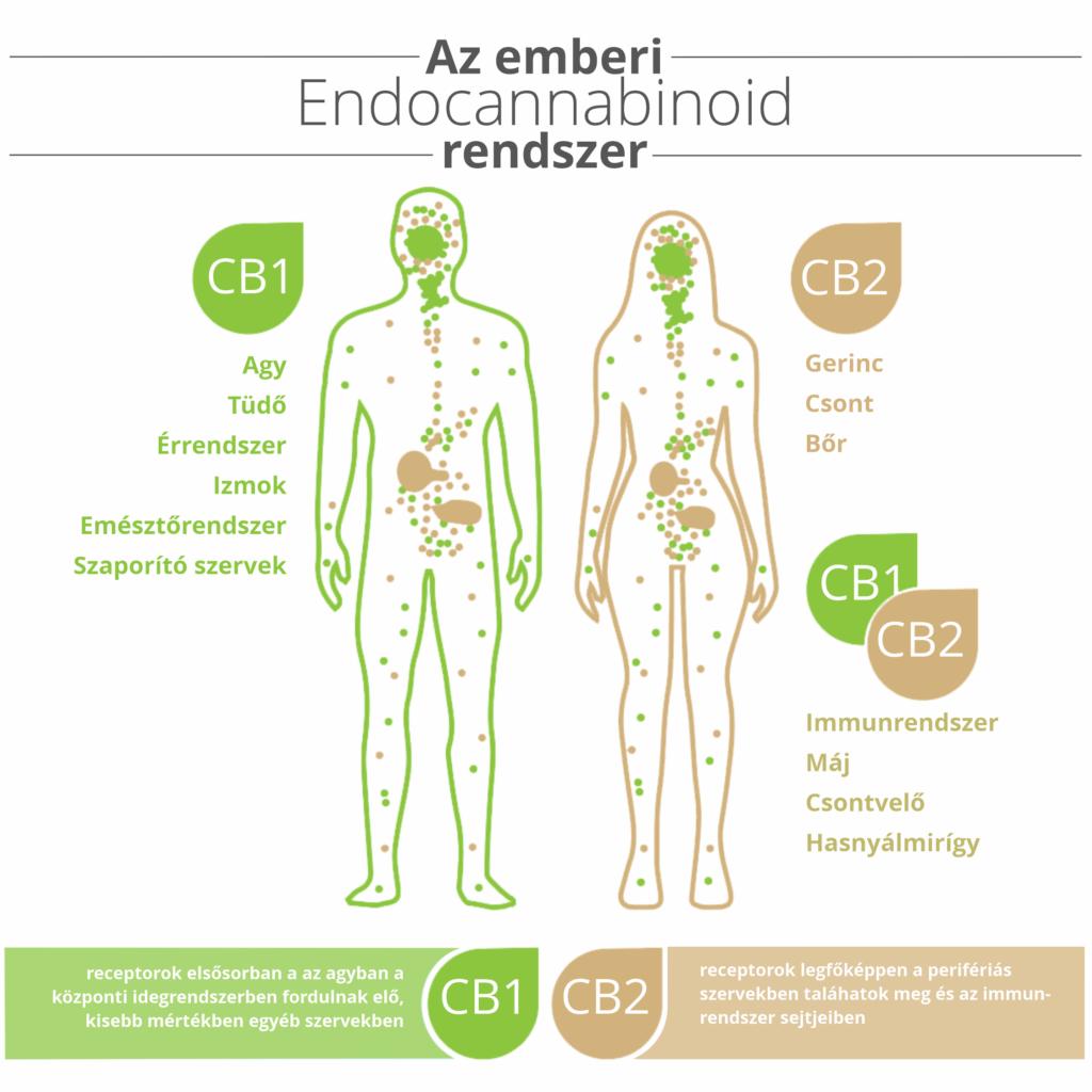 Marryjane - Marry Jane - EKR - ECS - endokannabinoid rendszer - endocannabinoid system -CB1 - CB2 - receptor - CBD olajok - kender termékek - kendercsepp - Kendertér