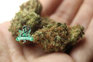 Kannabisz előnyök és hátrányok