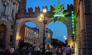Az olaszok magasabb THC tartalmú kenderrel helyettesítik a nyugtatókat, antidepresszánsokat, állítja egy új tanulmány