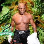 """Mike Tyson kannabiszt fogyasztott, mielőtt Roy Jones Jr. ellen harcolt volna: """"Egyszerűen ez vagyok én"""""""