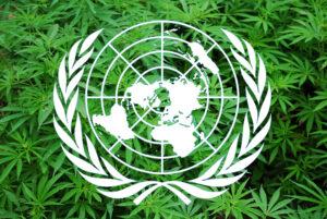 Az ENSZ ma átsorolta a kannabiszt a kevésbé veszélyes drogok közé
