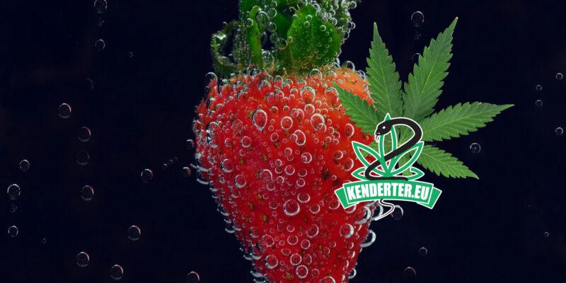 A gyümölcsök CBD-vel történő kezelése, növeli azok eltarthatóságát és lelassítja romlásukat