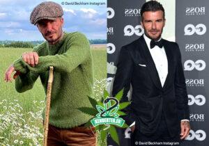 David Beckham szintetikus CBD cégbe fektet, ami atlétikai regeneráló termékeket gyárt