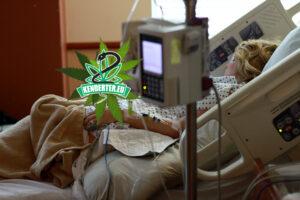 Egy osztrák kórházban a covidos betegek CBD-t kapnak, az orvosok nem hisznek a szemüknek