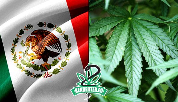 A mexikói legfelsőbb bíróság dekriminalizálta a kannabiszt, mert alkotmányellenesnek tartja a fogyasztók kriminalizálását