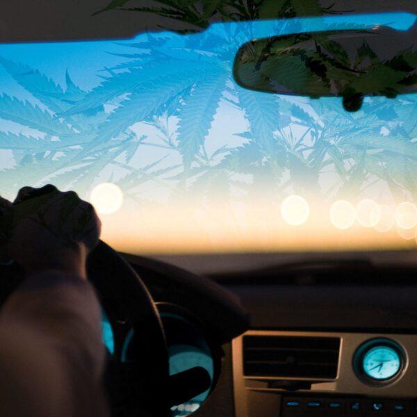 A rendszeres kannabisz-fogyasztók elhanyagolható változásokat mutatnak a szimulált vezetési teljesítmény során